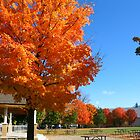 I love my town!  Aurora in fall. Ontario. Canada by Wenjin Zheng