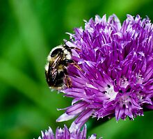 Little Bumble Bee by Kimberly Deverell