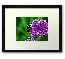 Little Bumble Bee Framed Print