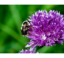 Little Bumble Bee Photographic Print