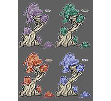 Tree - season square Photographic Print