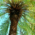 Pretty Palm View by Susanne Van Hulst