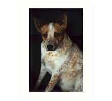 Red Heeler Portrait Art Print