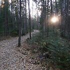 Follow the trail by Brady Flageole