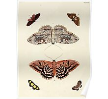 Exotic butterflies of the three parts of the world Pieter Cramer and Caspar Stoll 1782 V2 0072 Poster