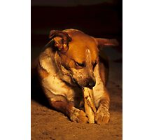 Red Heeler And Bone Photographic Print