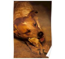 Red Heeler And Bone Poster