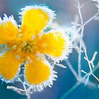 Frost flower by natans