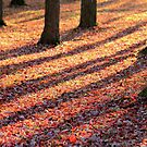 Confetti Carpet by Kelly Chiara