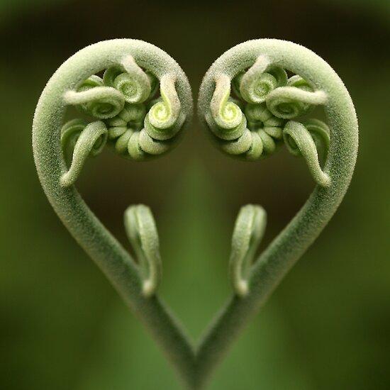 reflective heart by Iris Mackenzie