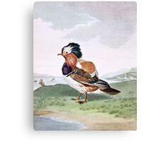 Mandarin Duck Bird Illustration Canvas Print