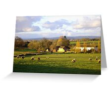 Sheep in the fields Greeting Card