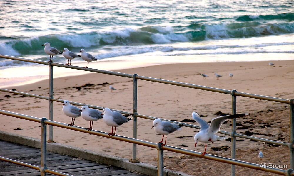 Seagull social club..... by Ali Brown