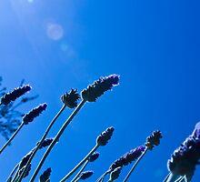Breeze blew blue by Stephen Denham