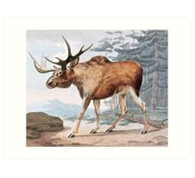 Bull Moose Vintage Drawing Art Print