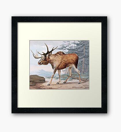 Bull Moose Vintage Drawing Framed Print