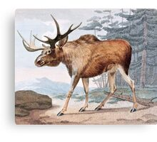 Bull Moose Vintage Drawing Canvas Print
