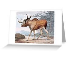 Bull Moose Vintage Drawing Greeting Card