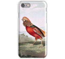 Painted Pheasants iPhone Case/Skin
