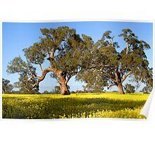 Aussie Gold Poster