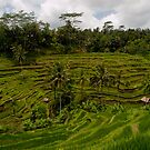 Tegalalang Rice Terrace by Keith Irving