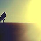 Bird by farcaphoto