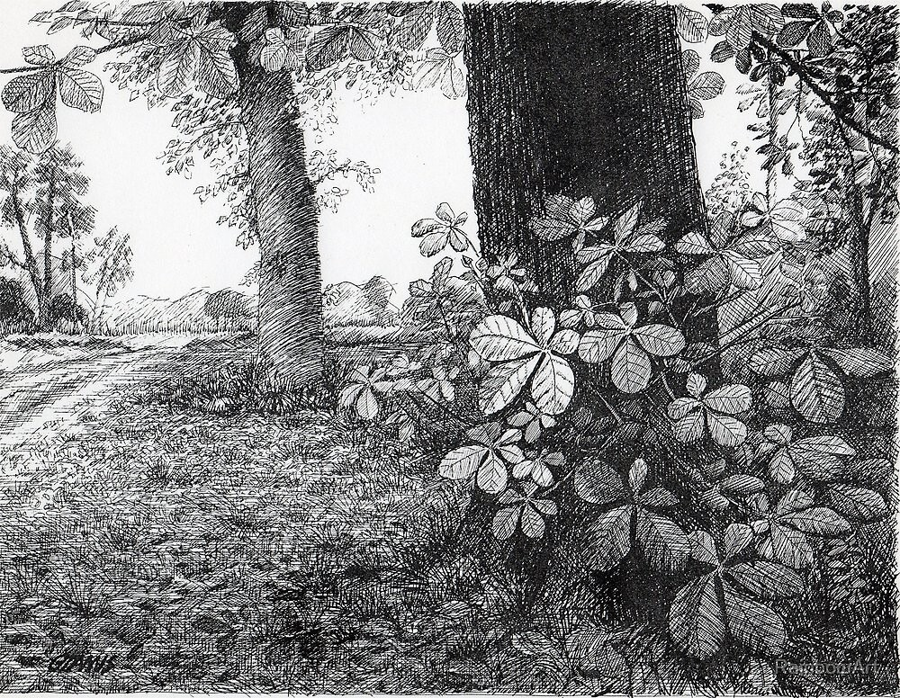 Into The Woods - Inkt Pen Drawing by RainbowArt
