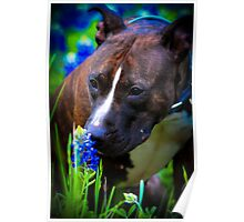 Pitbullbonnet. Stop and Smell the Flowers Poster