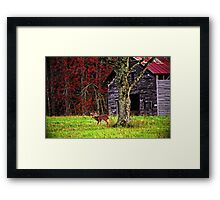 Buck by Ole Barn Framed Print