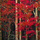 Red Leaves by Terri~Lynn Bealle