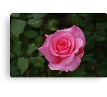 Sylvia is looking lovely today Canvas Print