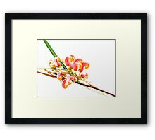 Flower Power - grevillea Framed Print