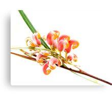 Flower Power - grevillea Canvas Print