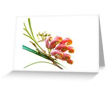 Aussie outback - red grevillea Greeting Card