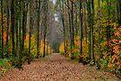 Fall in the Forest by Jo Nijenhuis