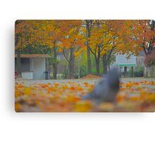 Golden Morning -  Add a touch of sunlight - (CNN News) Fri Oct 15  by Brown Sugar. Views (87) pls... cu18r  !!!  Canvas Print