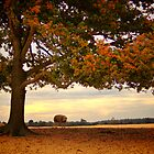 In the Shadow of a Tree - Aekingerzand by Jo Nijenhuis