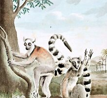 Ring-Tailed Lemurs Illustration by goldenmenagerie