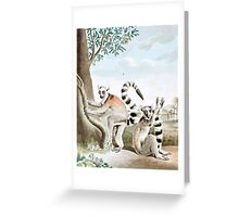 Ring-Tailed Lemurs Illustration Greeting Card