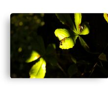 Leaf in shadow and light Canvas Print