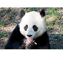 Giant Panda and Treat Photographic Print