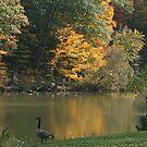 Autumn at Glacier Lake by Monnie Ryan