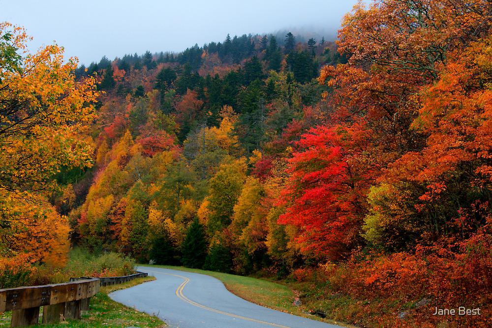 Blue Ridge Parkway by Jane Best
