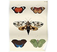 Exotic butterflies of the three parts of the world Pieter Cramer and Caspar Stoll 1782 V2 0182 Poster