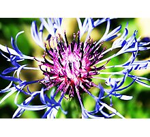Flower! Photographic Print