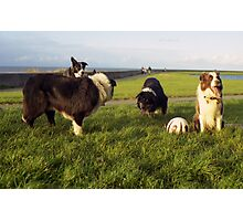 Indy, Basil, Tess and Red Photographic Print