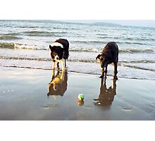 Indy and Shela at the beach Photographic Print