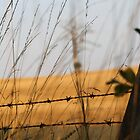 Autumn Barbed Wire by Jack Bailey