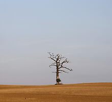 Isolated Tree by Jack Bailey