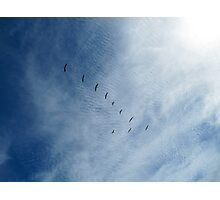 Distant Birds  Photographic Print